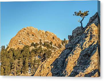 Horsetooth Rock And Pine Tree Canvas Print by Marek Uliasz