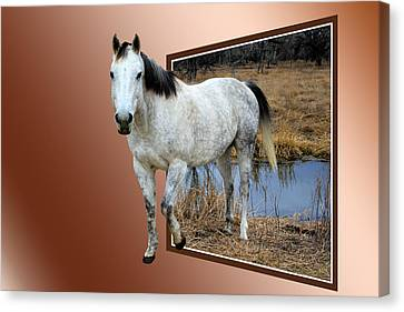 Horsing Around Canvas Print by Shane Bechler
