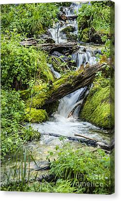 Canvas Print featuring the photograph Horton Springs by Anthony Citro