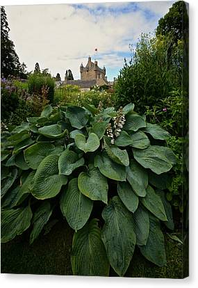 Hosta At Cowdor Castle Canvas Print