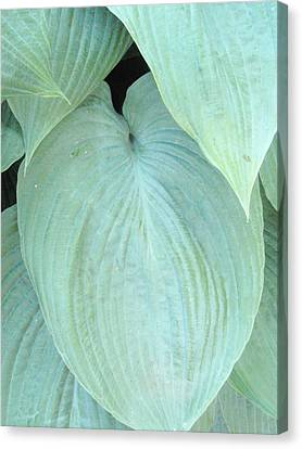 Canvas Print featuring the photograph Hosta by Beth Akerman
