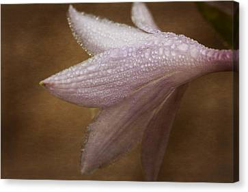 Hostas Bloom Canvas Print by Karol Livote
