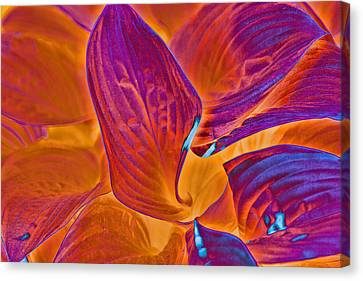 Canvas Print featuring the photograph Hostas With Sabattier by Bill Barber