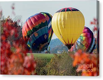 Hot Air Balloons Lift Off Canvas Print by Dan Friend