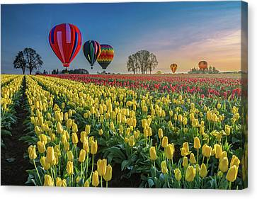 Hot Air Balloons Over Tulip Fields Canvas Print by William Lee