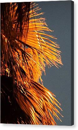 Hot Air Frizzies Canvas Print