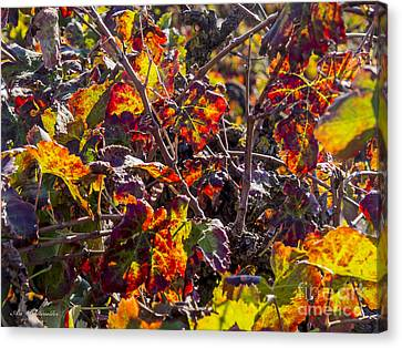 Israel Canvas Print - Hot Autumn Colors In The Vineyard 03 by Arik Baltinester