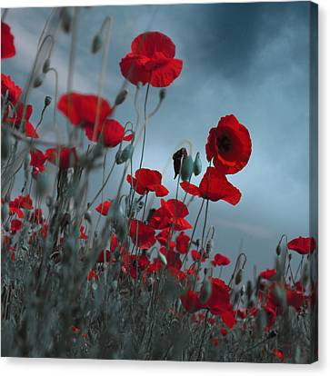 Flower Bed Canvas Print - Hot Cold Contrast 1 by Floriana Barbu