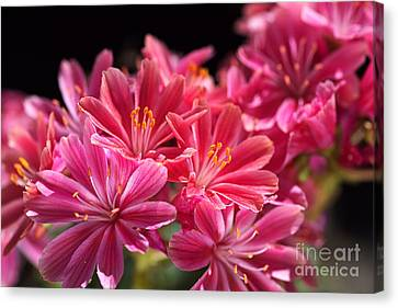 Hot Glowing Pink Delight Of Flowers Canvas Print