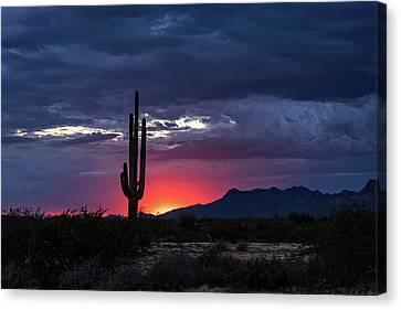 Canvas Print featuring the photograph Hot Pink Saguaro Sunset  by Saija Lehtonen