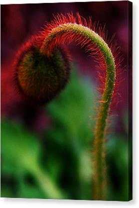 Canvas Print - Hot Poppy by Susie DeZarn