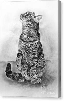 House Cat Canvas Print