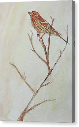 Canvas Print featuring the painting House Finch  by Kara Evelyn-McNeil