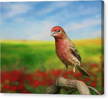 Canvas Print featuring the photograph House Finch by Steven Richardson