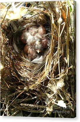 Canvas Print featuring the photograph House Wren Family by Angie Rea