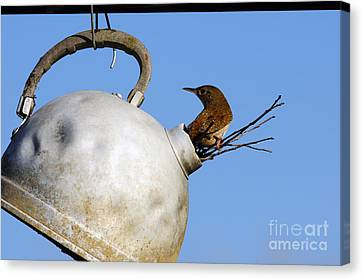 House Wren In New Home Canvas Print by Thomas R Fletcher