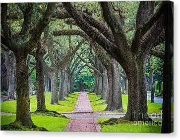 Houston Trees Canvas Print