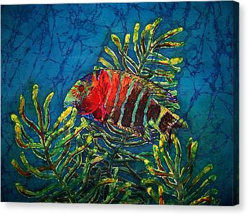 Hovering - Red Banded Wrasse Canvas Print by Sue Duda
