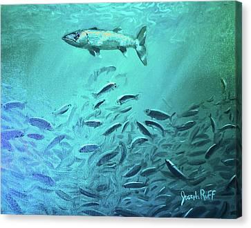Hovering Baracuda Canvas Print by Joseph   Ruff