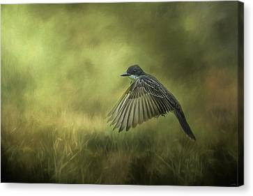 Hovering Eastern Kingbird In Flight Art Canvas Print