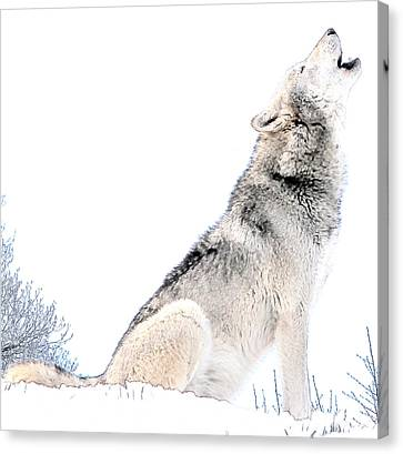Howling Wolf 1 Canvas Print
