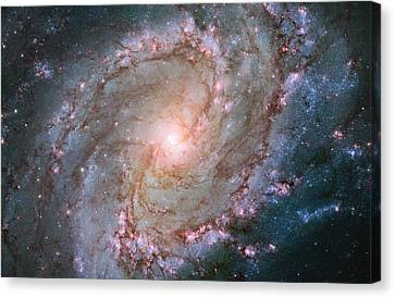 Hubble Views Stellar Genesis In The Southern Pinwheel Galaxy Canvas Print