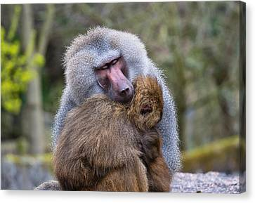 Canvas Print featuring the photograph Hug Me by Scott Carruthers