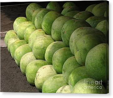 Huge Watermelons Canvas Print