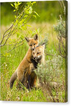 Hugs Canvas Print by Aaron Whittemore