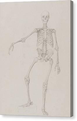 Human Skeleton, Anterior View Canvas Print by George Stubbs