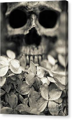 Human Skull Among Flowers Canvas Print by Edward Fielding