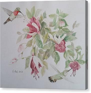 Hummer Couple On Fushia Canvas Print by Sally Atchinson