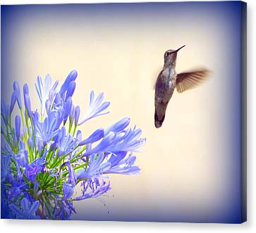 Hummer In Blue Canvas Print