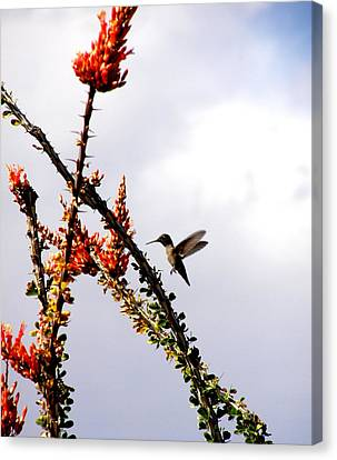 Canvas Print featuring the photograph Hummer Likes Red by Jeanette Oberholtzer