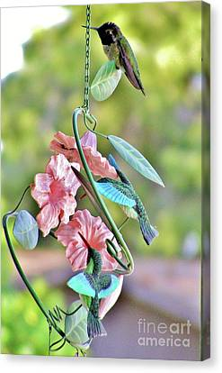 Hummer On Hummers Canvas Print by Marilyn Smith