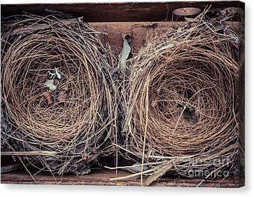 Humming Bird Nests Canvas Print by Edward Fielding