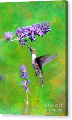 Humming Bird Visit Canvas Print by Lila Fisher-Wenzel