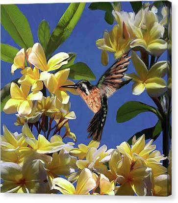 Hummingbird 01 Canvas Print