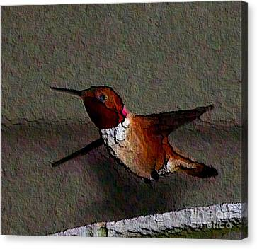 Canvas Print featuring the photograph Hummingbird 2 - Embossed by Erica Hanel