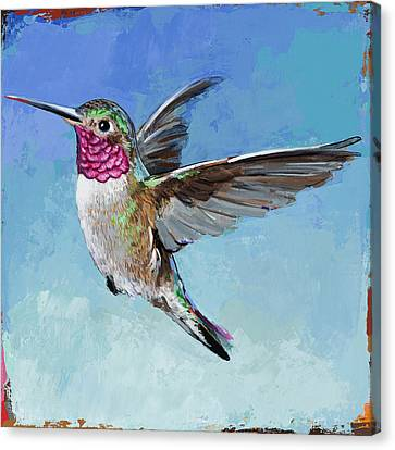 Hummingbird #6 Canvas Print by David Palmer