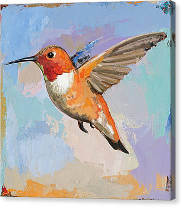 Hummingbird Canvas Print - Hummingbird #7 by David Palmer