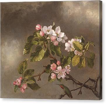 Hummingbird And Apple Blossoms Canvas Print by Martin Johnson Heade