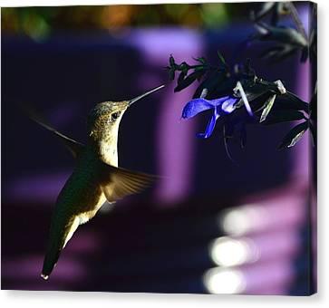 Hummingbird And Blue Flower Canvas Print