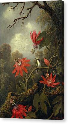Hummingbird And Passionflowers , Martin Johnson Heade 1819-1904 Canvas Print