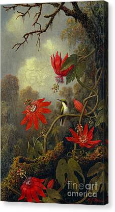 Hummingbird And Passionflowers 1877 Canvas Print by Padre Art