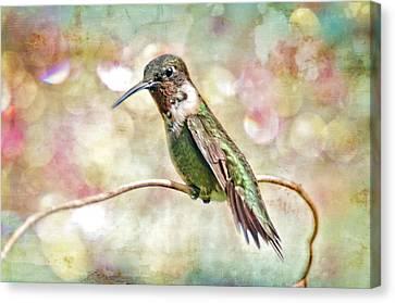 Male Hummingbird Canvas Print - Hummingbird Art by Bonnie Barry