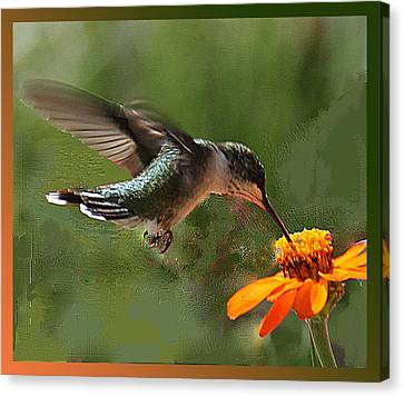 Hummingbird Art Canvas Print
