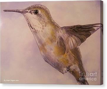 Hummingbird Canvas Print by Crispin  Delgado