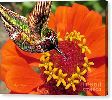 Hummingbird Delight Canvas Print by Kimberlee Baxter