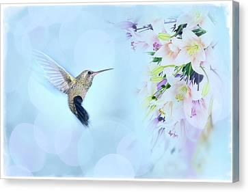 Hummingbird Flora Canvas Print by Amanda Lakey